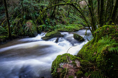 Cascading stream through a lush green forest Royalty Free Stock Photos