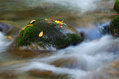 Cascading stream water. Over rocks Royalty Free Stock Images