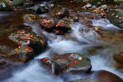 Cascading stream water. Over rocks Stock Photos