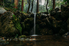 Cascading waterfall in forest Royalty Free Stock Photography