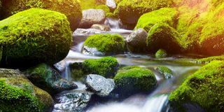 Cascading Waterfall Fresh Nature Green Environment Concept. Cascading Nature Green Environment Concept Stock Photos