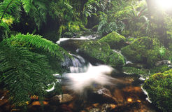 Cascading Waterfall Pancake Rocks New Zealand Concept Royalty Free Stock Photography