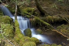 Cascading Waters. A beautiful cascading waterfall is frammed by moss-covered rocks and some tress Stock Images