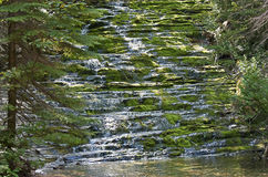 Cascading wilderness brook Stock Photo