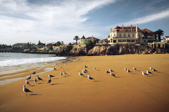 Cascais Seagulls Royalty Free Stock Image