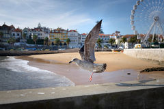 Cascais Seaguls Stock Photography