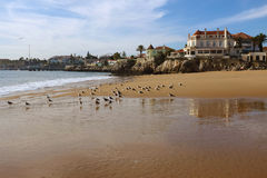 Cascais Seaguls Stock Photo