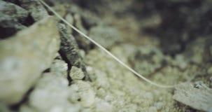 Cascalho e areia Zorra macro à terra, tiro na câmera vermelha filme