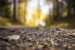 Cascalho na estrada secundária rural através da floresta Foto de Stock
