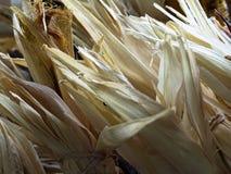 Cascas de milho secas Foto de Stock Royalty Free