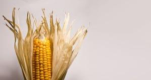 Cascas de milho secas Imagens de Stock
