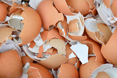 Cascas de ovo esmagadas imagens de stock