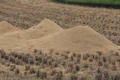 Cascas do arroz Imagem de Stock