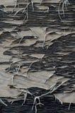 Cascas pretas da pintura longe da madeira compensada fotografia de stock royalty free
