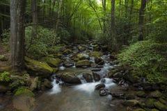 Cascase in weelderig bos in Zuid-Carolina stock foto's