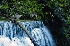Cascata al canyon di Vintgar in alpi slovene Fotografia Stock Libera da Diritti