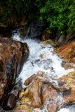 Cascata al picco di Adam - Sri Lanka Immagine Stock