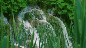 Cascata al rallentatore dietro l'erba stock footage