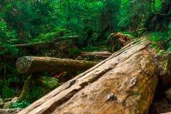 Cascata autunnale sulla torrente montano L'acqua spumosa sta cadendo sopra il masso muscoso e le foglie corful Lo spruzzo crea so fotografia stock libera da diritti