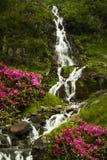 Cascata in Carpathians Immagini Stock