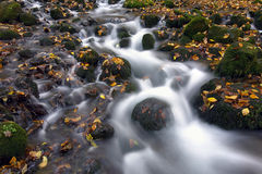 Cascata con i fogli di autunno catturati expososure lungo Fotografie Stock Libere da Diritti