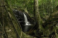 Cascata con i grandi alberi Fotografie Stock