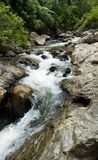 Cascata da água na floresta Foto de Stock Royalty Free