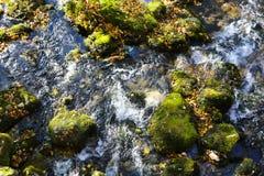 Cascata da angra da montanha com musgo verde em árvores caídas Imagens de Stock
