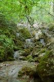 Cascata da floresta Fotografia de Stock Royalty Free