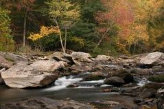 Cascata da floresta imagem de stock royalty free