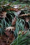Cascata das folhas Fotos de Stock Royalty Free