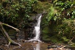 Cascata del terreno boscoso Fotografia Stock