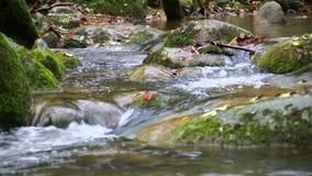 Cascata dell'insenatura con le foglie cadute di rosso nella caduta video d archivio