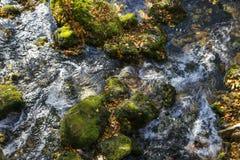 Cascata dell'insenatura della montagna con muschio verde sugli alberi caduti Fotografia Stock Libera da Diritti