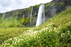 Cascata dell'Islanda Fotografie Stock