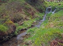 Cascata della corrente dell'acqua della foresta nell'erba di geen immagine stock
