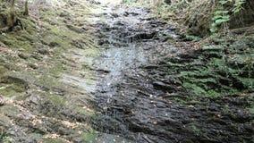 Cascata della corrente di Dorte alla valle di Dortebachtal al fiume di Mosella germany La parte del Mosella rive il percorso in R video d archivio
