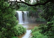 Cascata della foresta Immagine Stock