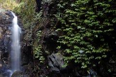 Cascata della foresta pluviale Immagini Stock