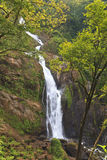 Cascata della foresta pluviale di Rican della Costa Immagine Stock Libera da Diritti
