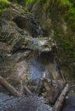 Cascata della montagna nel paradiso slovacco Immagine Stock Libera da Diritti
