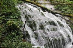 Cascata della natura con la pianta verde e l'erbaccia acquatica immagini stock libere da diritti