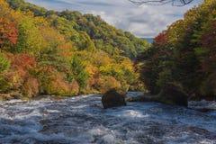 Cascata della natura nella corrente dell'acqua della foresta stagione a nikko Giappone fotografia stock
