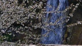 Cascata della primavera nella gola 4K della montagna video d archivio