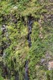 Cascata della traccia di escursione di Levada di venticinque fontane, Madera di Risco Fotografia Stock