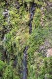 Cascata della traccia di escursione di Levada di venticinque fontane, Madera di Risco Immagini Stock