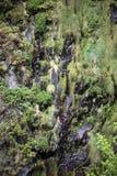 Cascata della traccia di escursione di Levada di venticinque fontane, Madera di Risco Fotografie Stock