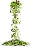 Cascata di insalata mista 免版税库存照片