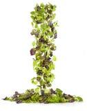 Cascata di insalata mista 库存图片