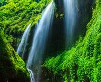 Cascata di Madakaripura, East Java, Indonesia immagine stock